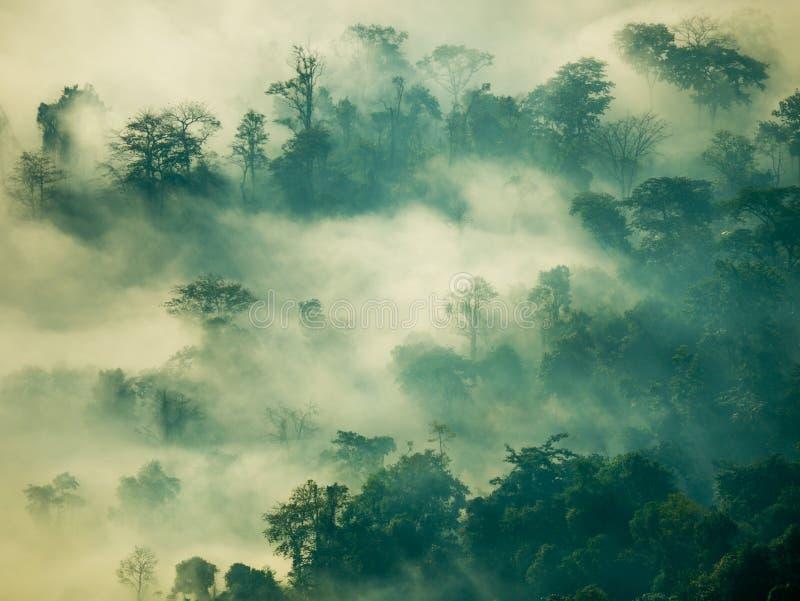 Névoa místico na floresta na montanha imagens de stock