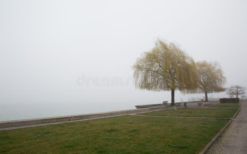 Névoa na beira do lago imagem de stock