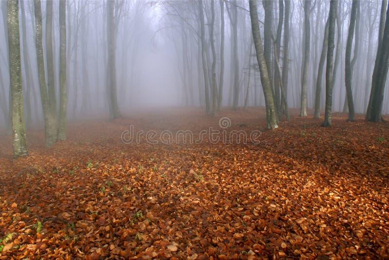 Névoa na floresta imagens de stock royalty free
