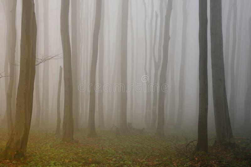 Névoa na floresta imagem de stock royalty free