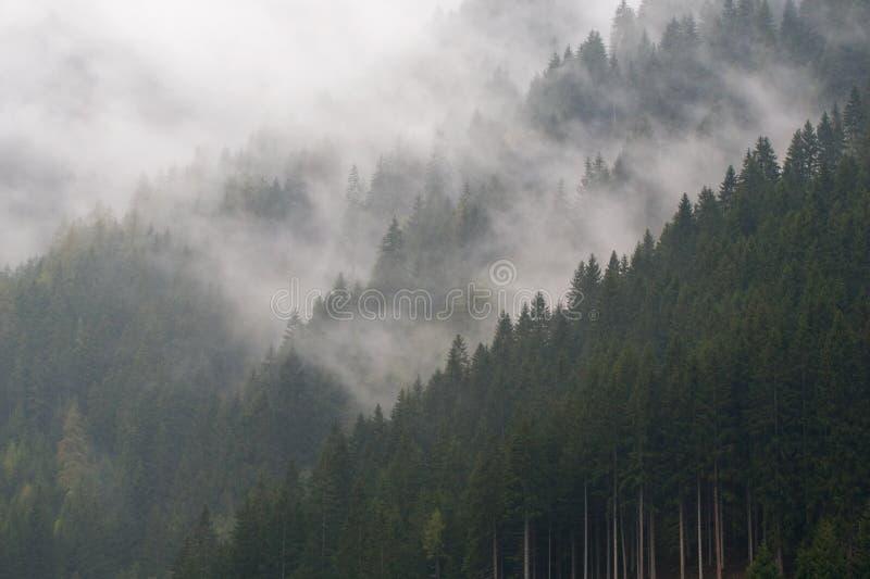 Névoa na floresta da montanha fotografia de stock