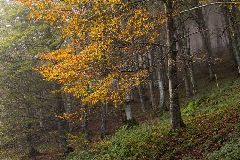 Névoa na floresta enevoada fotos de stock royalty free
