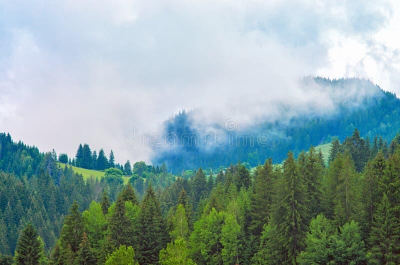 Névoa na floresta, pinheiros, montanhas fotografia de stock