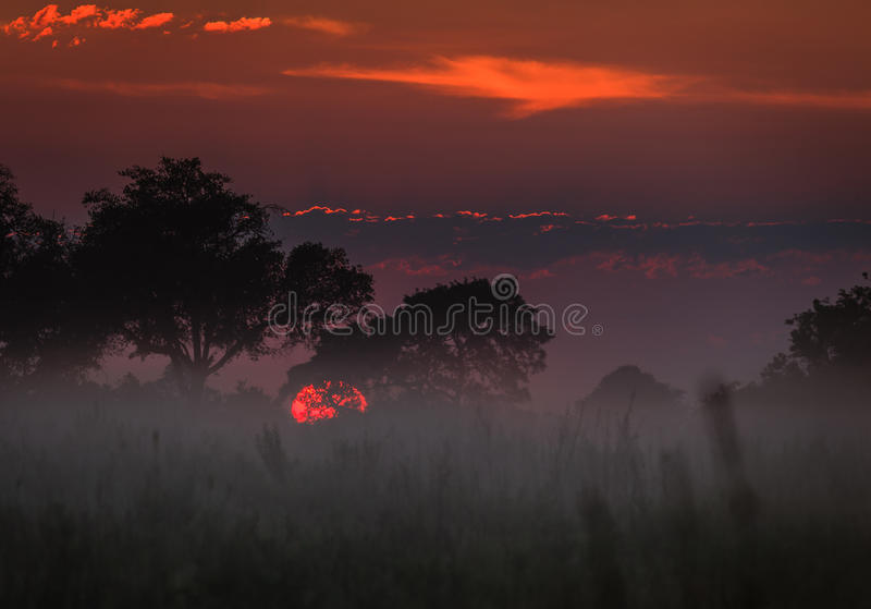 A névoa pendura baixo no nascer do sol sobre o delta Botswana de Okavango, África imagem de stock