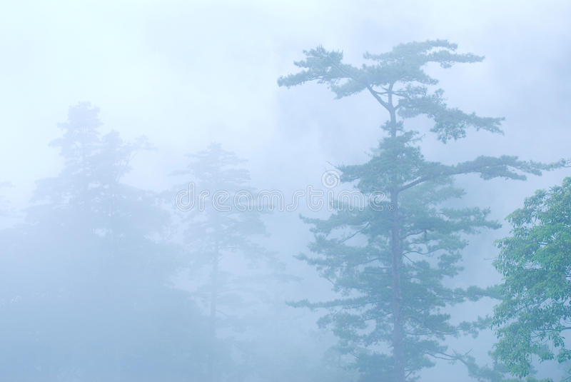 Névoa profunda na floresta natural. fotografia de stock royalty free