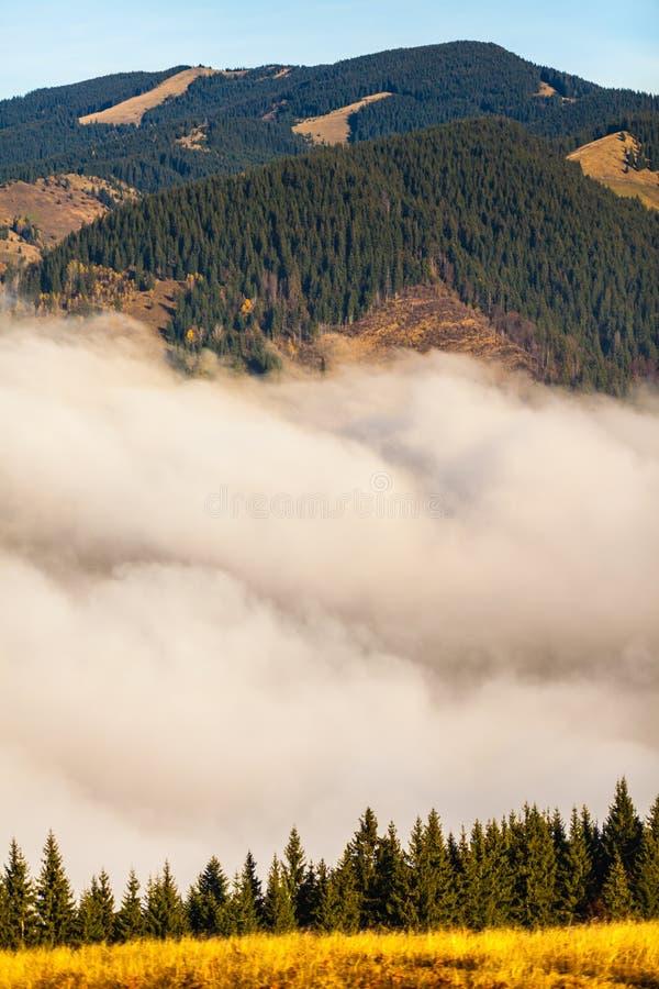Névoa que cobre as florestas da montanha foto de stock