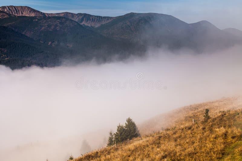 Névoa que cobre as florestas da montanha imagens de stock