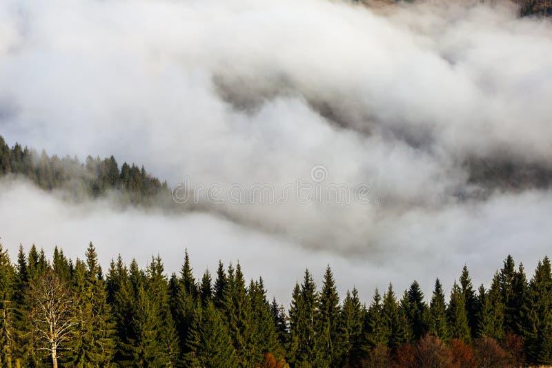 Névoa que cobre as florestas da montanha fotografia de stock royalty free