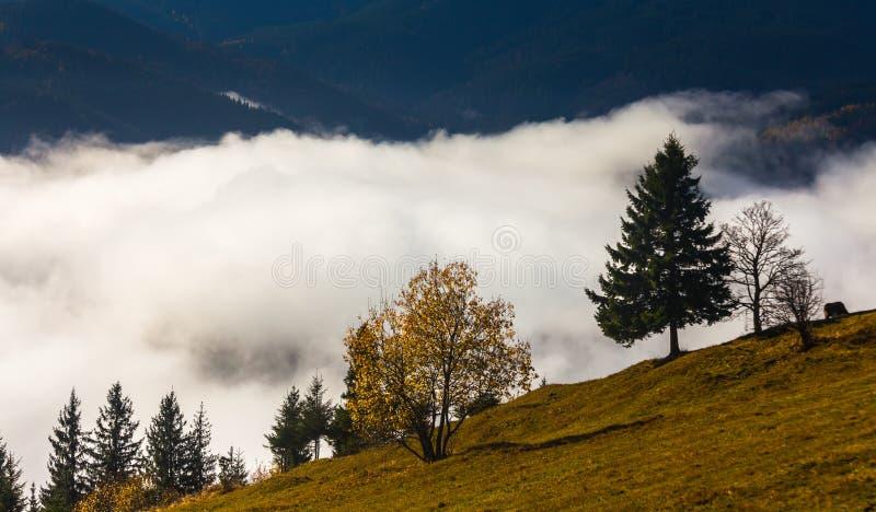 Névoa que cobre as florestas da montanha fotos de stock