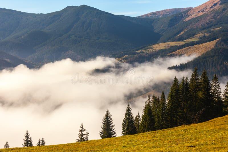 Névoa que cobre as florestas da montanha foto de stock royalty free