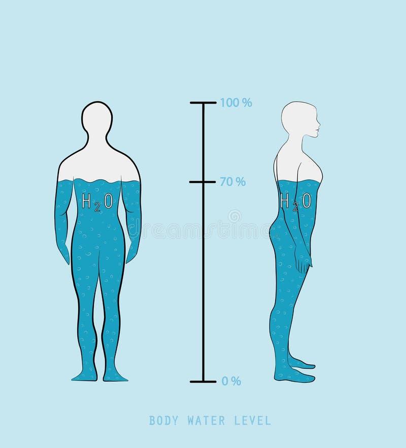 Nível mostrando infographic da porcentagem da água da silhueta da mulher ilustração royalty free
