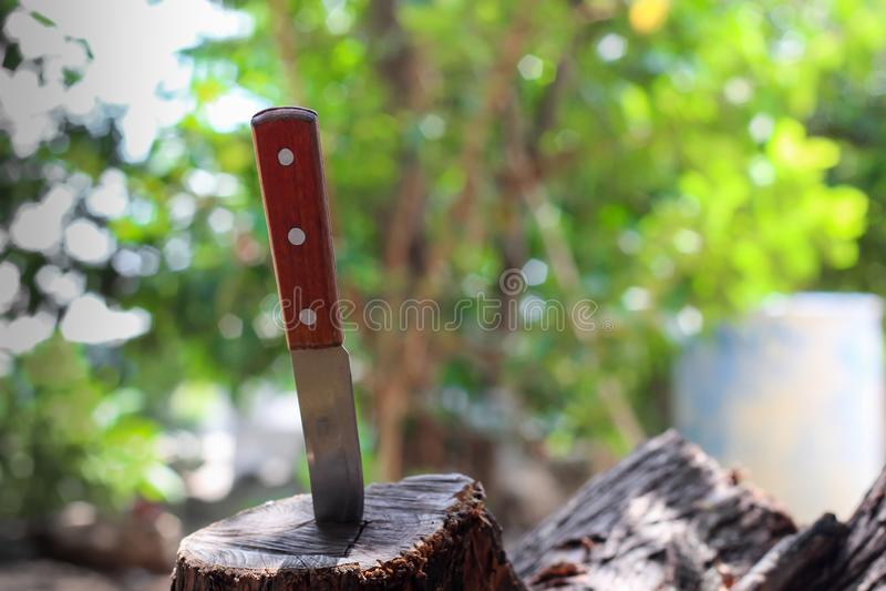 Nóż z drewnianą rękojeścią, zablokowaną w kawałku bagażnik obraz stock