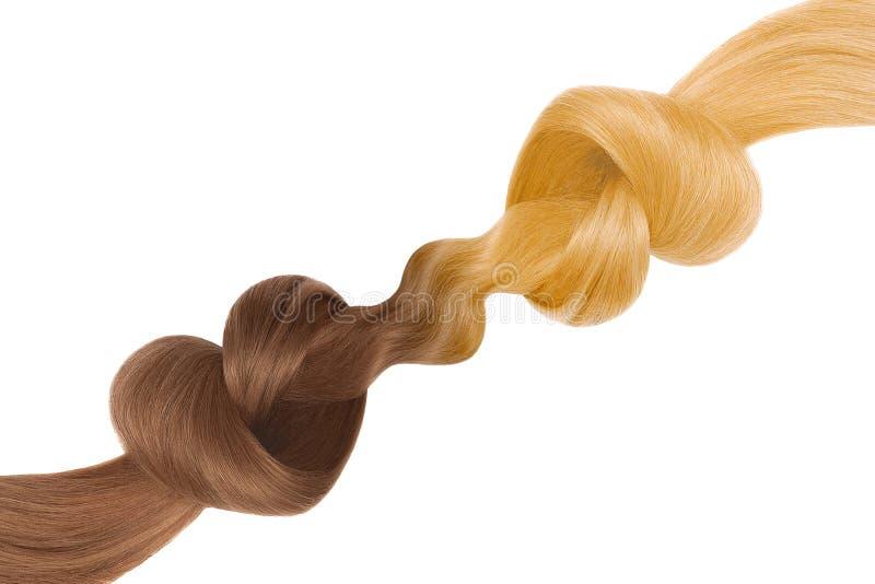Nós do cabelo na forma do coração, isolada no fundo branco Brown e louro Conceito do cuidado imagem de stock royalty free