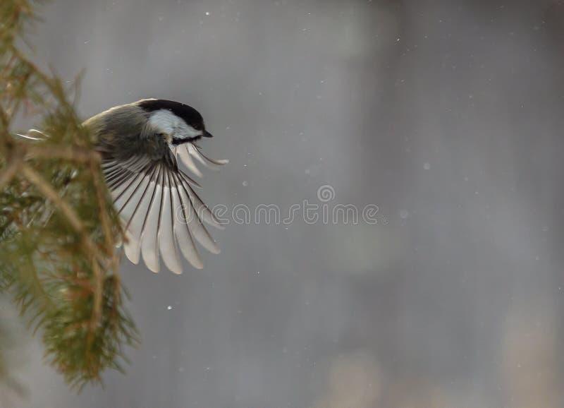 Nós temos a descolagem, olhamos para fora o alimentador do pássaro aqui mim para vir fotos de stock