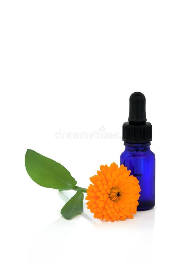 nödvändig blommaolja för calendula royaltyfria bilder