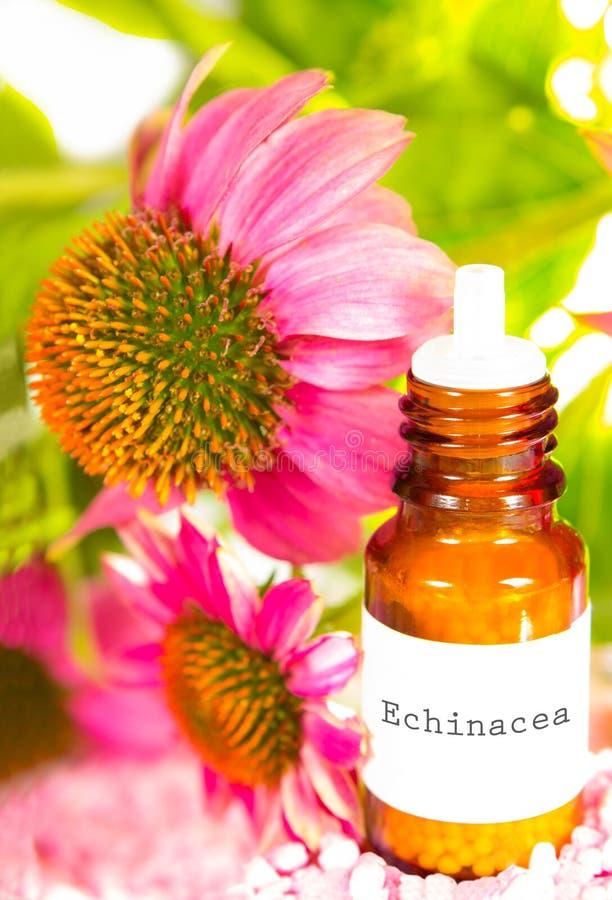 Nödvändig olja för Echinacea royaltyfri foto