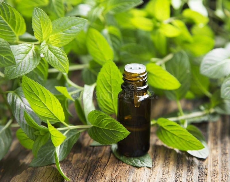 Nödvändig olja för naturlig mintkaramell i lite glasflaska royaltyfri bild