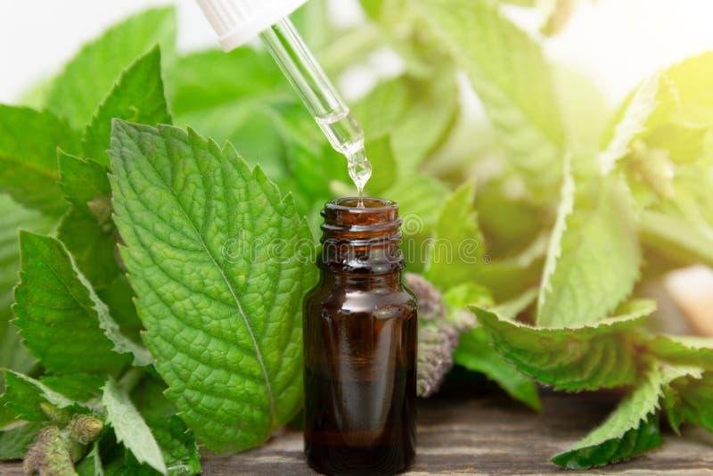 Nödvändig olja för naturlig pepparmint i en glasflaska med sidor för ny mintkaramell på träbakgrund royaltyfria bilder