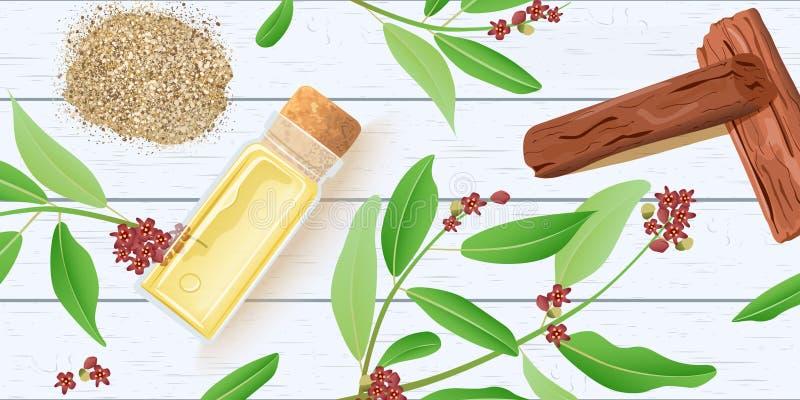 Nödvändig olja för sandelträn i exponeringsglasdoftflaska med kork på det vita träsjaskiga skrivbordet Chandan sidor, pinnar royaltyfri illustrationer