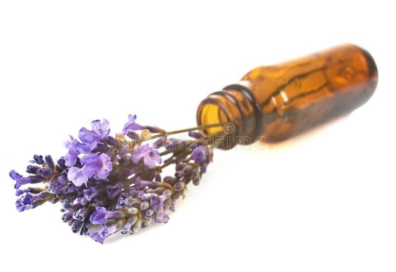 Nödvändiga oljor av lavendel royaltyfria bilder