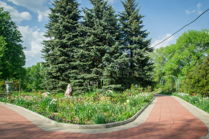 Nöje parkerar den blåa julgranrosträdgården royaltyfria foton