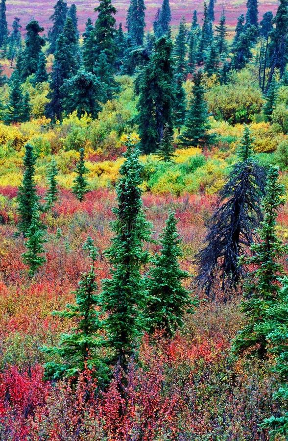 Nördlicher Wald stockfotografie