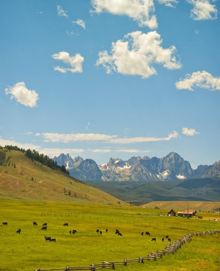 Nötkreaturranch och berg, Idaho royaltyfri fotografi