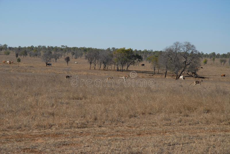 Nötkreaturstation i vildmark Queensland, Australien arkivfoton