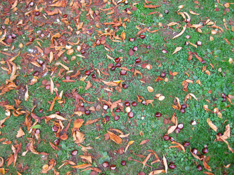Nötliknande gräs royaltyfri foto