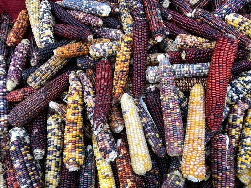 Núcleos de milho coloridos imagens de stock