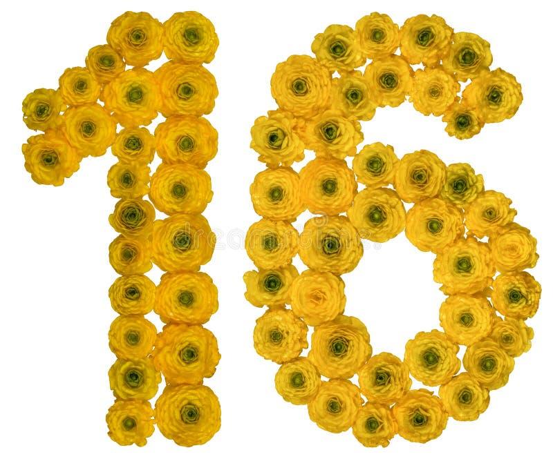 Número árabe 16, dieciséis, de las flores amarillas del ranúnculo, i imagen de archivo