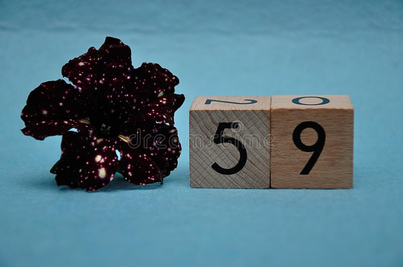 Número cincuenta y nueve con una petunia púrpura imagen de archivo libre de regalías