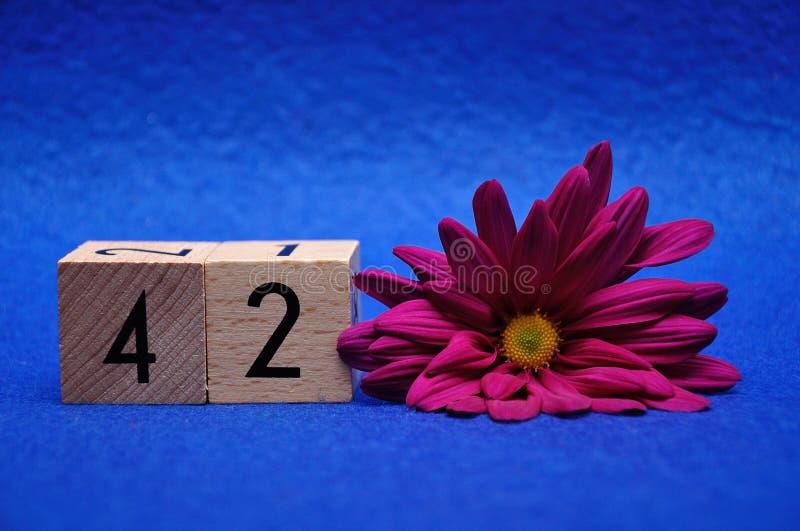 Número cuarenta y dos con una margarita púrpura fotografía de archivo