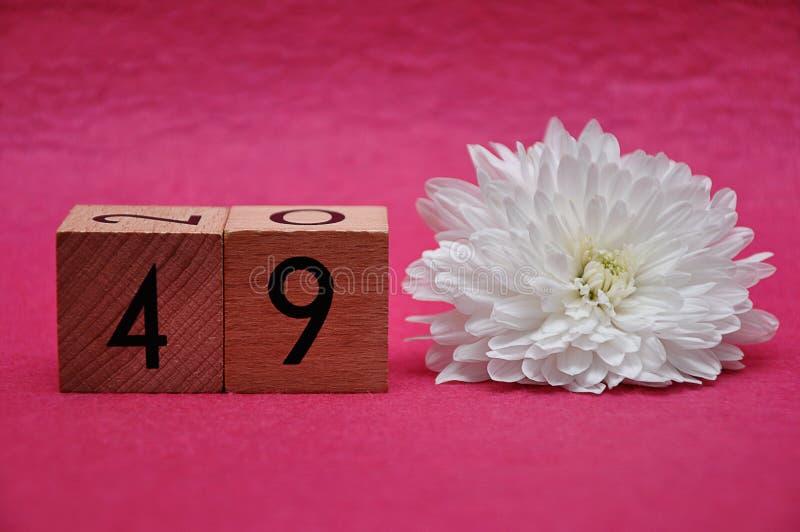 Número cuarenta y nueve con un aster blanco foto de archivo