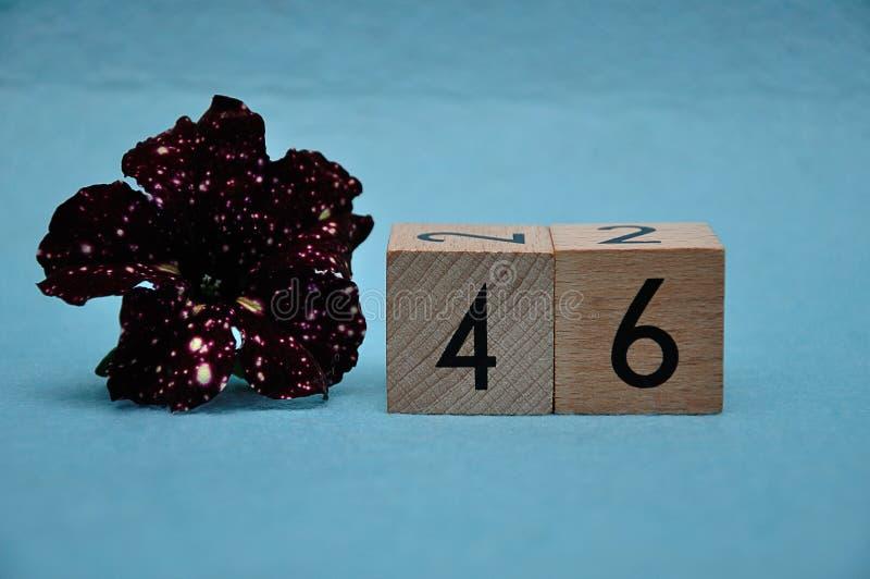 Número cuarenta y seis con una petunia púrpura fotos de archivo libres de regalías