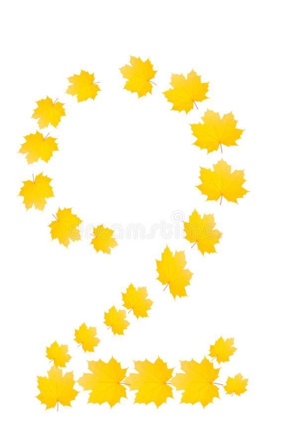 Número dois de folhas de bordo amarelas bonitas isolado em b branco imagem de stock royalty free