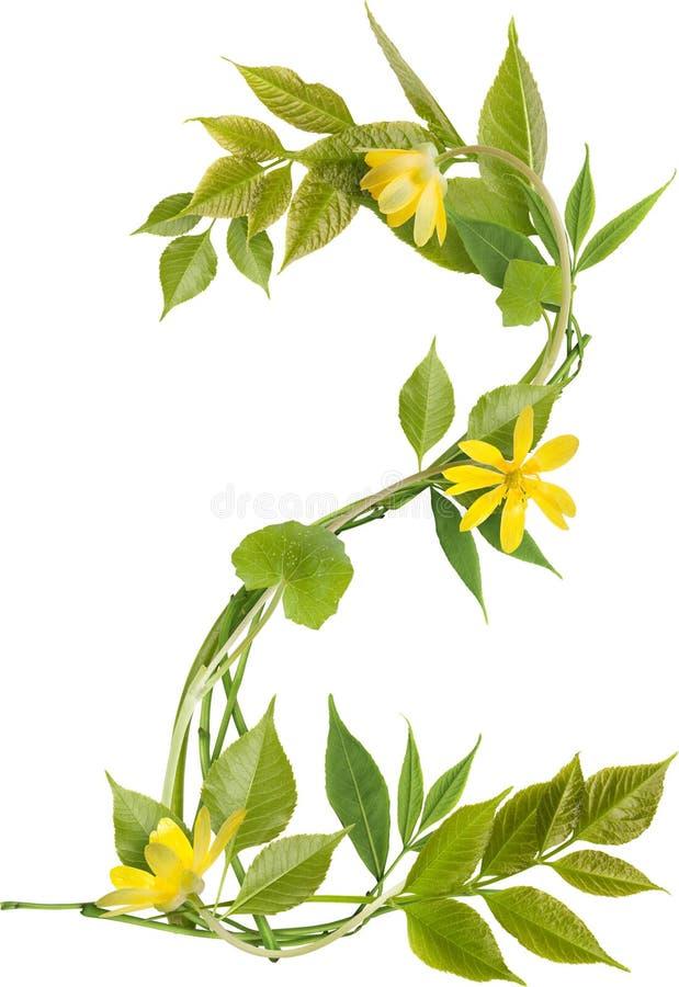 Número dos de ramificaciones con las hojas y las flores fotografía de archivo libre de regalías