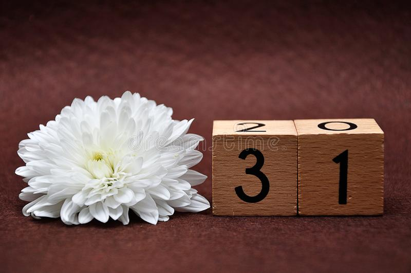 Número treinta uno con un aster blanco fotografía de archivo