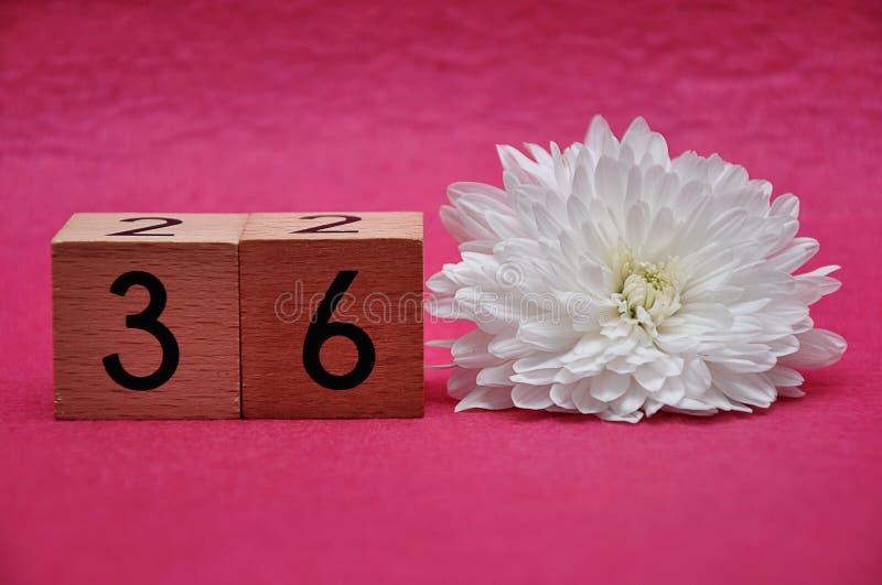 Número treinta y seis con un aster blanco imágenes de archivo libres de regalías