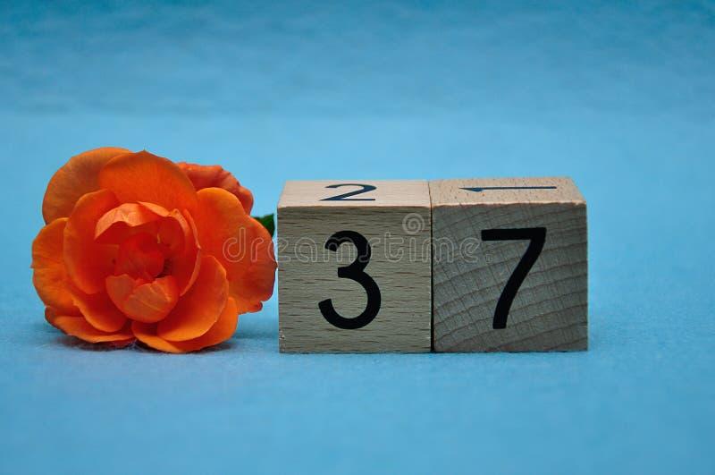 Número treinta y siete con una rosa anaranjada imagen de archivo libre de regalías