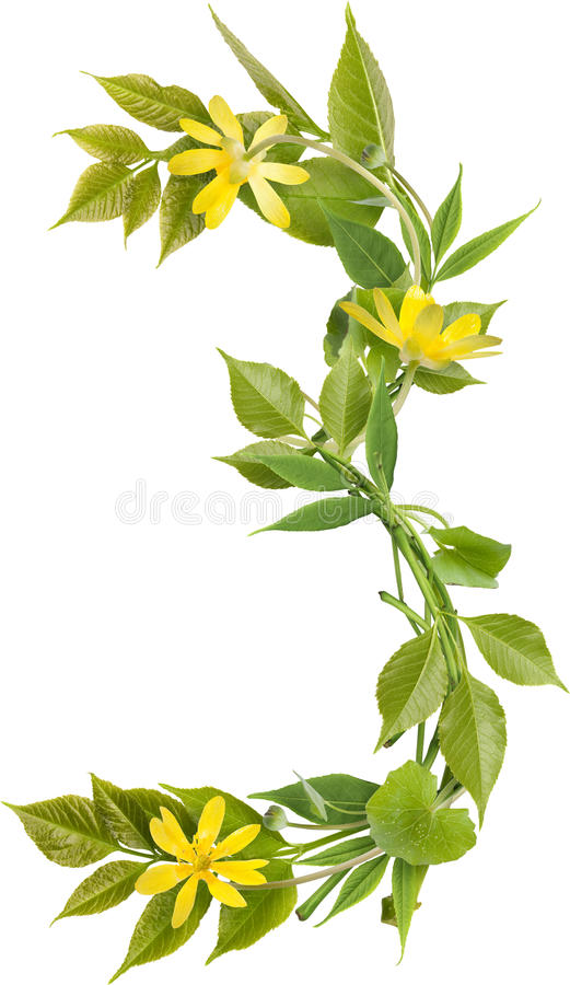 Número tres de ramificaciones con las hojas y las flores imagen de archivo