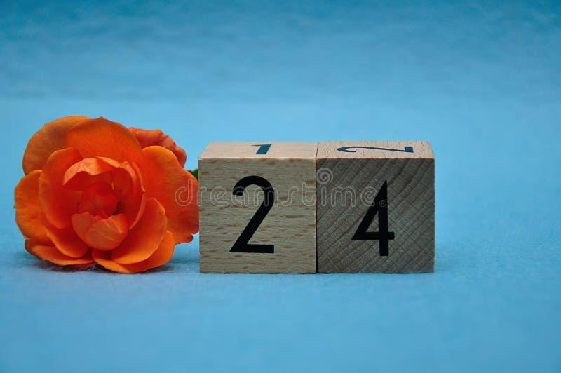 Número veinticuatro con una rosa anaranjada imágenes de archivo libres de regalías