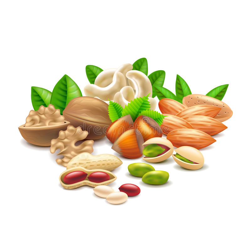 Nüsse auf weißem Vektor stock abbildung