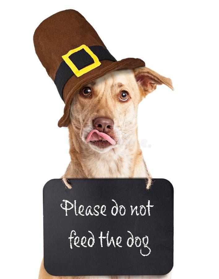 N'alimentez pas le chien le thanksgiving image libre de droits