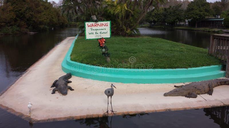 N'alimentez pas les alligators image stock