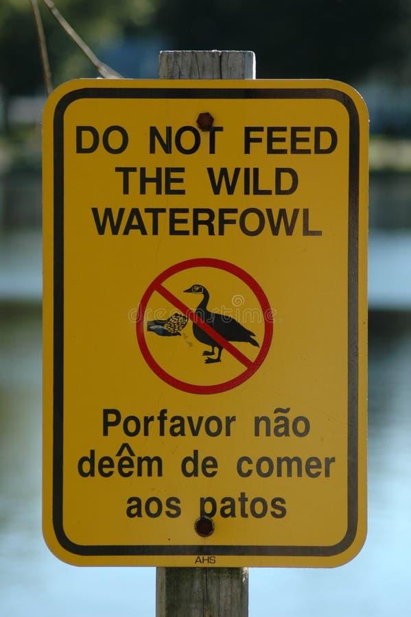 N'alimentez pas les canards photo libre de droits