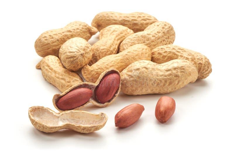 N?tzliche Erdnuss, Nahaufnahme, lokalisiert auf wei?em Hintergrund stockbild