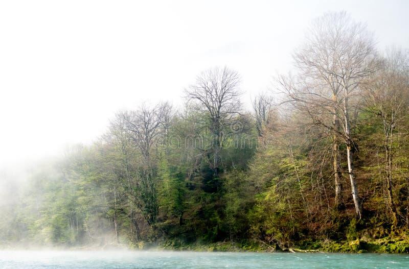 N?voa sobre o rio em uma floresta na mola fotografia de stock royalty free