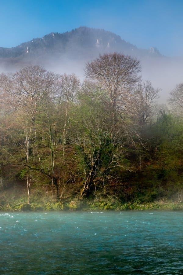 N?voa sobre o rio em uma floresta na mola foto de stock