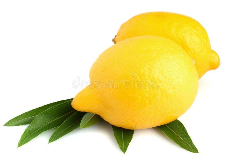 Na biały tle dwa żółtej dojrzałej cytryny obrazy stock